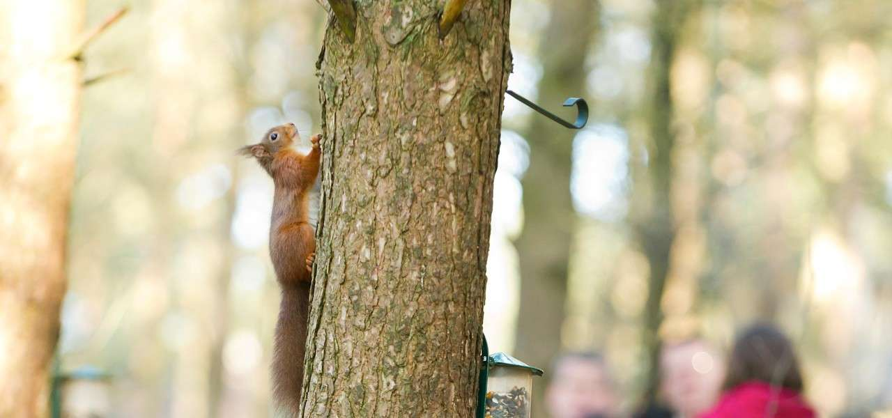 A Red Squirrel Family Adventure