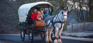Festive Carriage Rides