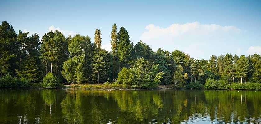 Center parcs lake and forest
